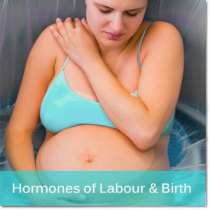 button for Hormones of Labour & Birth